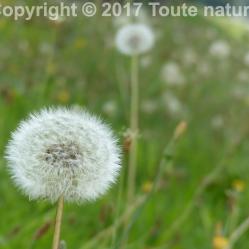 Fleurs16